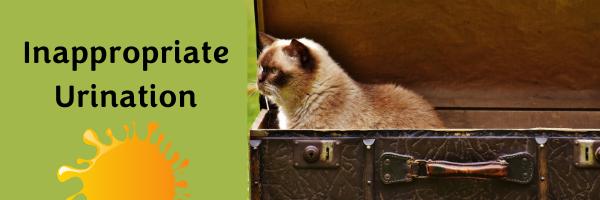 Cat urinating in suitcase